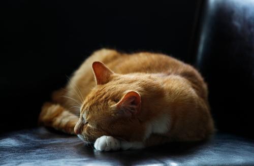 חתול ישן